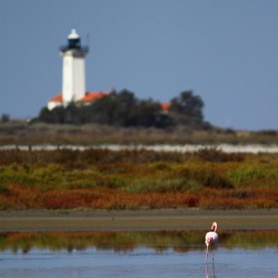 Le phare et l'oiseau